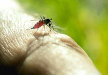 Cum se prepară o soluție naturală împotriva tânțarilor?
